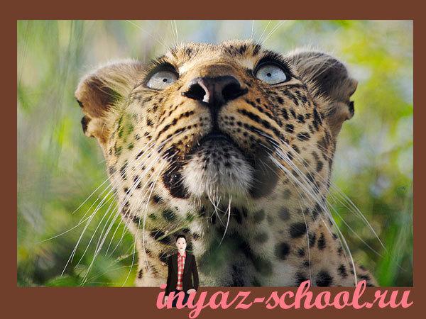 Inyaz-school.ru